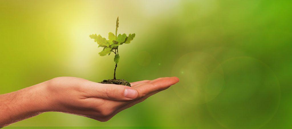 main avec une frêle racine d'arbre à planter