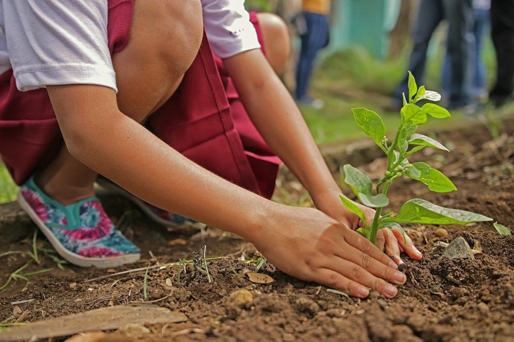 enfant plantant un légume